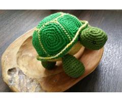 Middelgrote schildpad
