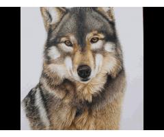 Tekening wolf potlood