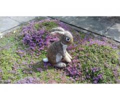 lief knuffel konijn