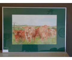 Koeien uit Clery le Grand